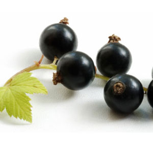 Fruit Game Option - Blackcurrant