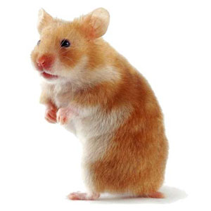 Pet Animal Game Option - hamster