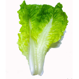 Vegetable Game Option - Lettuce