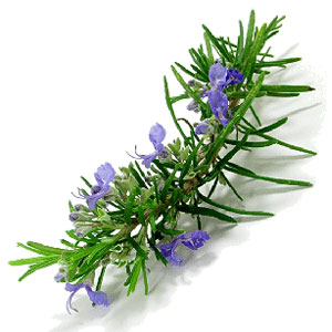 Vegetable Game Option - Rosemary